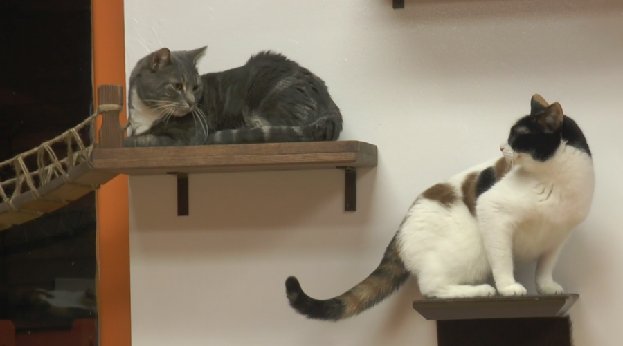 #THAT: A Haven for Cats