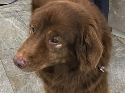 Dean's best friend safe after four days lost in state park